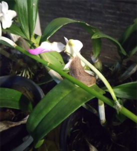 Snail on orchid